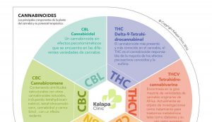 Cannabinoides Terapeuticos | Kalapa Clinic
