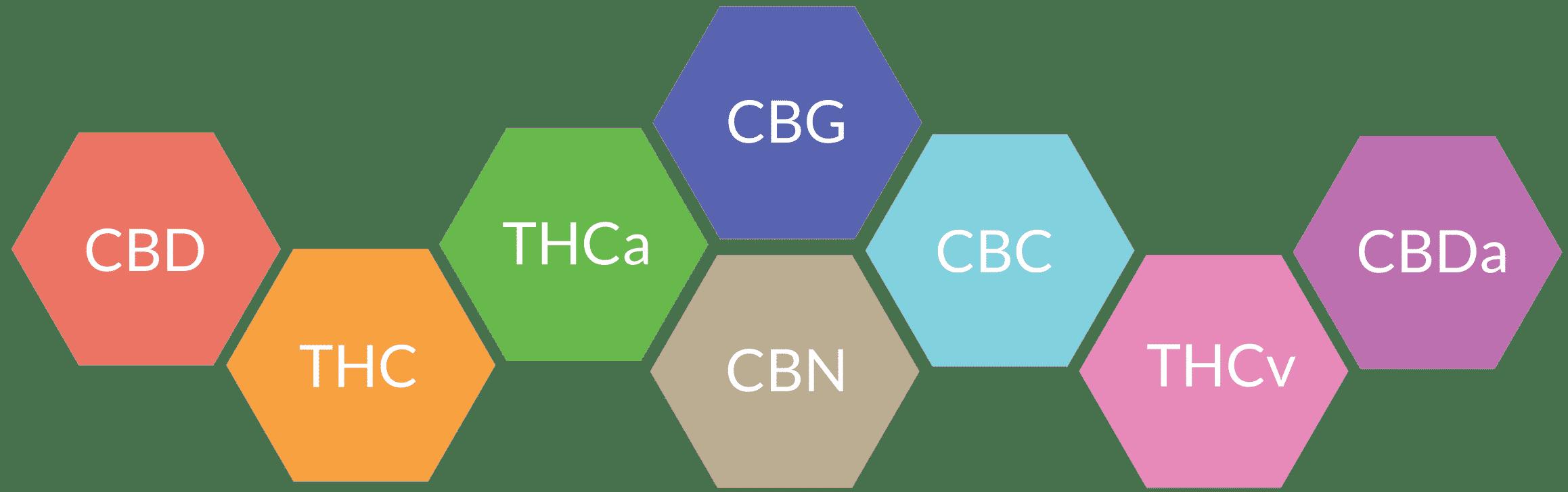 Haupt-Cannabinoide | Kalapa Clinic