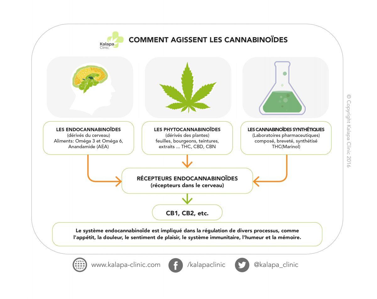 cannabinoides | Kalapa Clinic