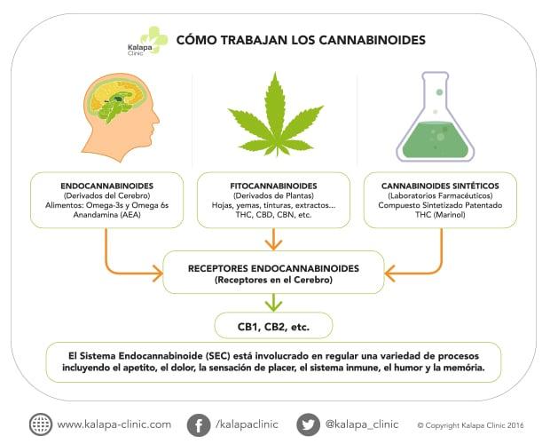 Tipo de cannabinoides | Kalapa Clinic