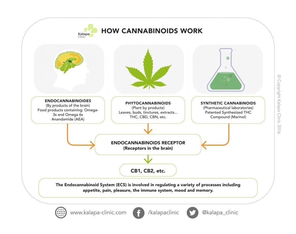 what are cannabinoids kalapa clinic