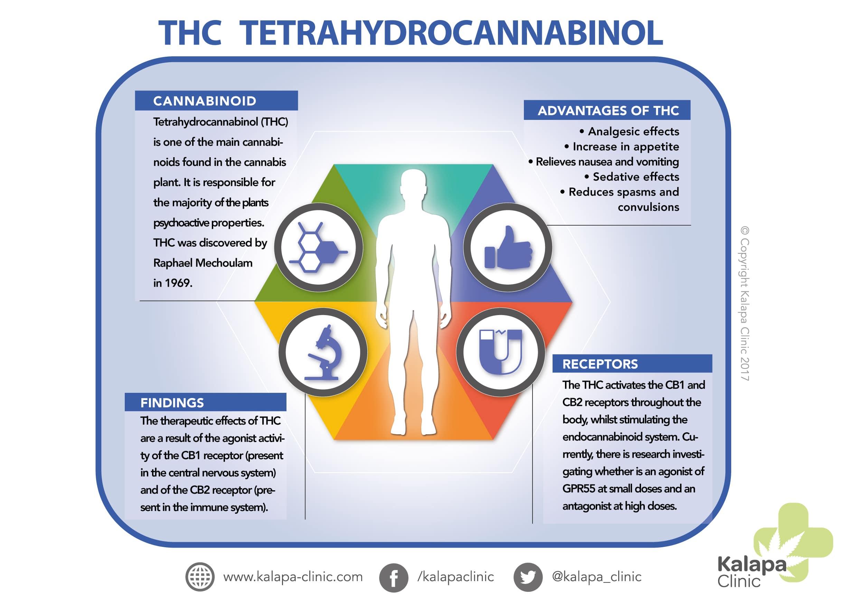 THC and its therapeutic properties | Tetrahydrocannabinol | Kalapa Clinic