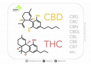 CBD - THC
