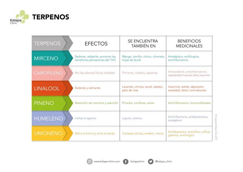 Czym są Terpeny? | Kalapa Clinic