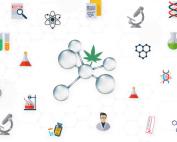 cannabinoides sinteticos-synthetic cannabinoids- cannabinoides synthetiques-synthetische cannabinoide-cannabinoidi sintetici