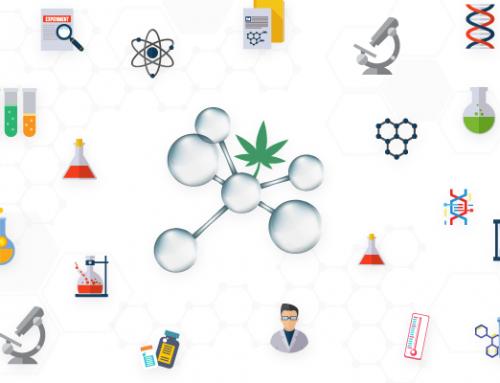¿Por qué los cannabinoides sintéticos son peligrosos?