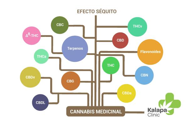 ¿Qué es el efecto séquito del cannabis medicinal?