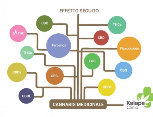 Che cosa è l'effetto seguito della cannabis medicinale?