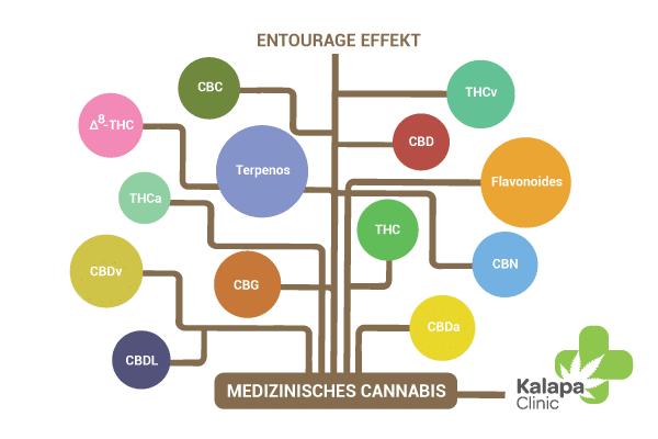 Entourage-Effekt von Cannabinoiden | Kalapa Clinic