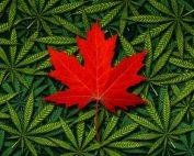 Legalizacion Cannabis Canada | Kalapa Clinic