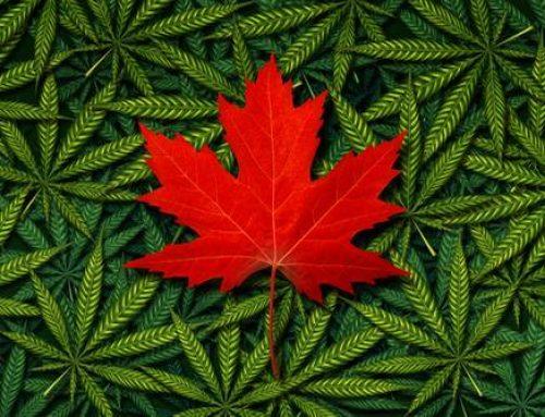 Le Canada légalise el cannabis