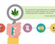 recherce cannabis medical