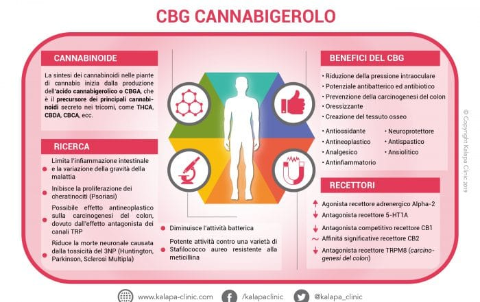 CBG cannabigerolo