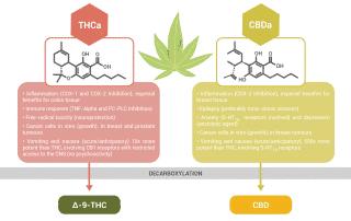 THCa and CBDa