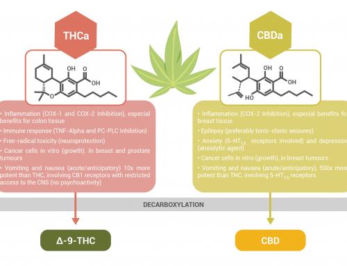 Cannabinoid Acids: medical benefits of THCa and CBDa