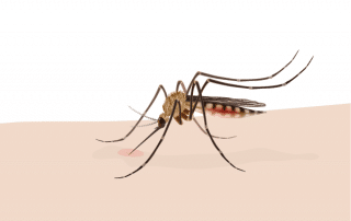 fight malaria Bekämpfung von Malaria