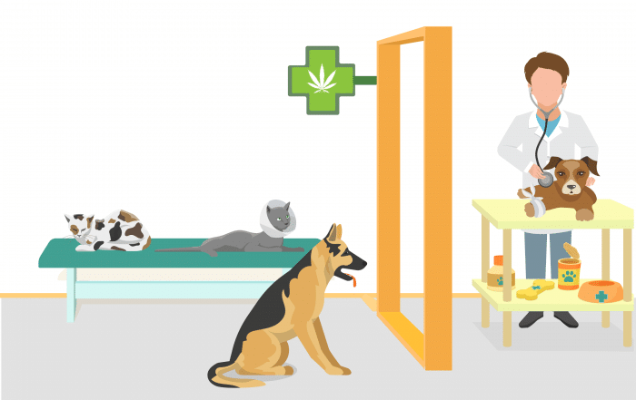 Cannabis médical pour animaux de compagnie - medical cannabis for pets