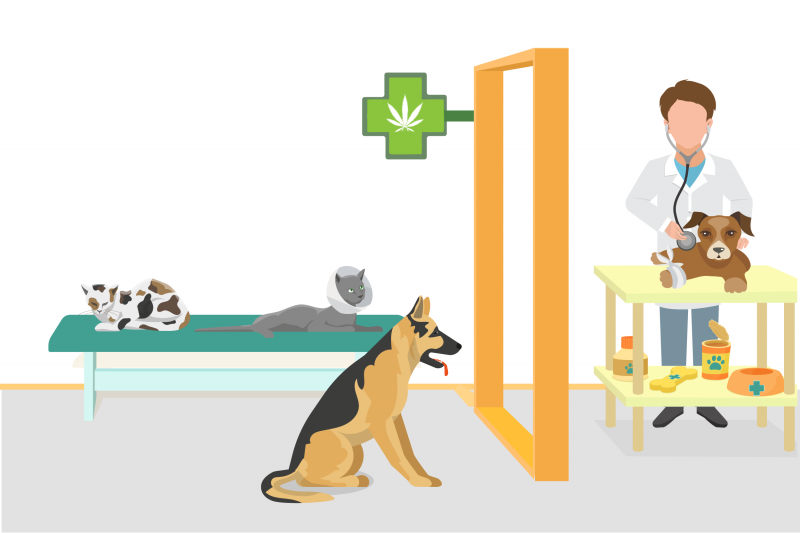 cannabis terapeutica per gli animali domestici- medical cannabis for pets