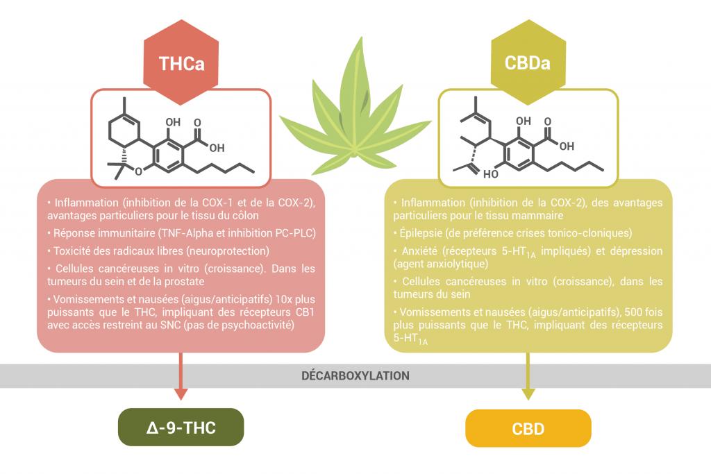 Acides cannabinoïdes