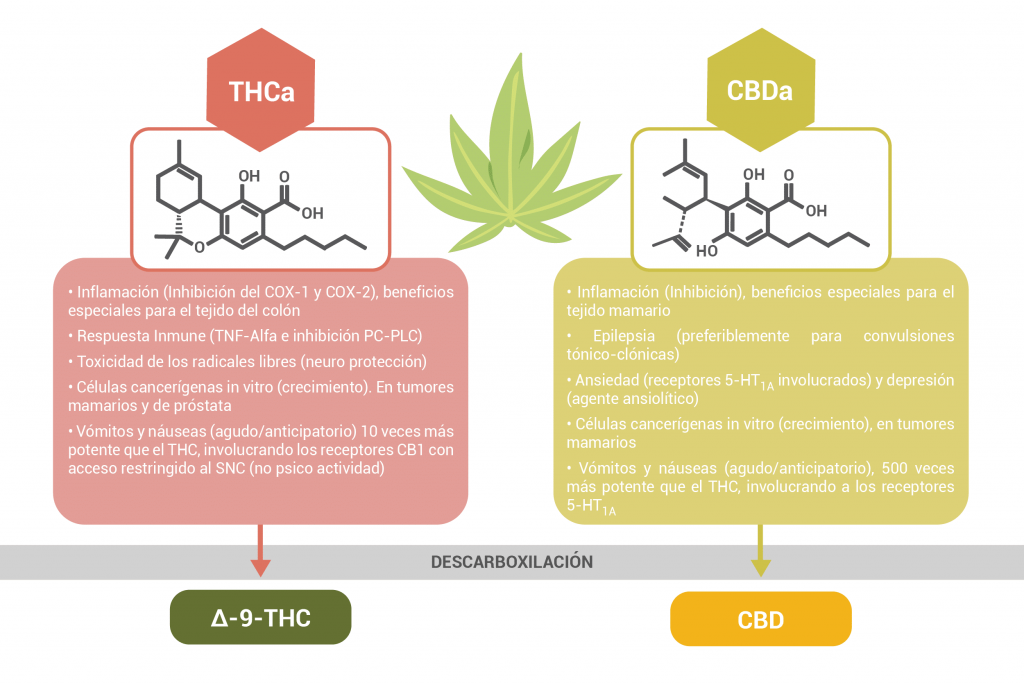 Cannabinoides ácidos