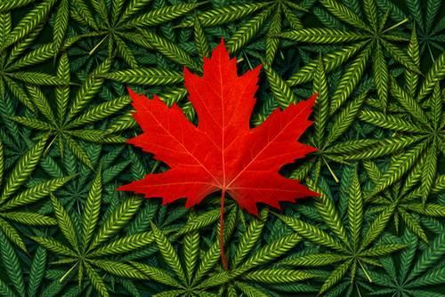 Legalizacion Cannabis Canada
