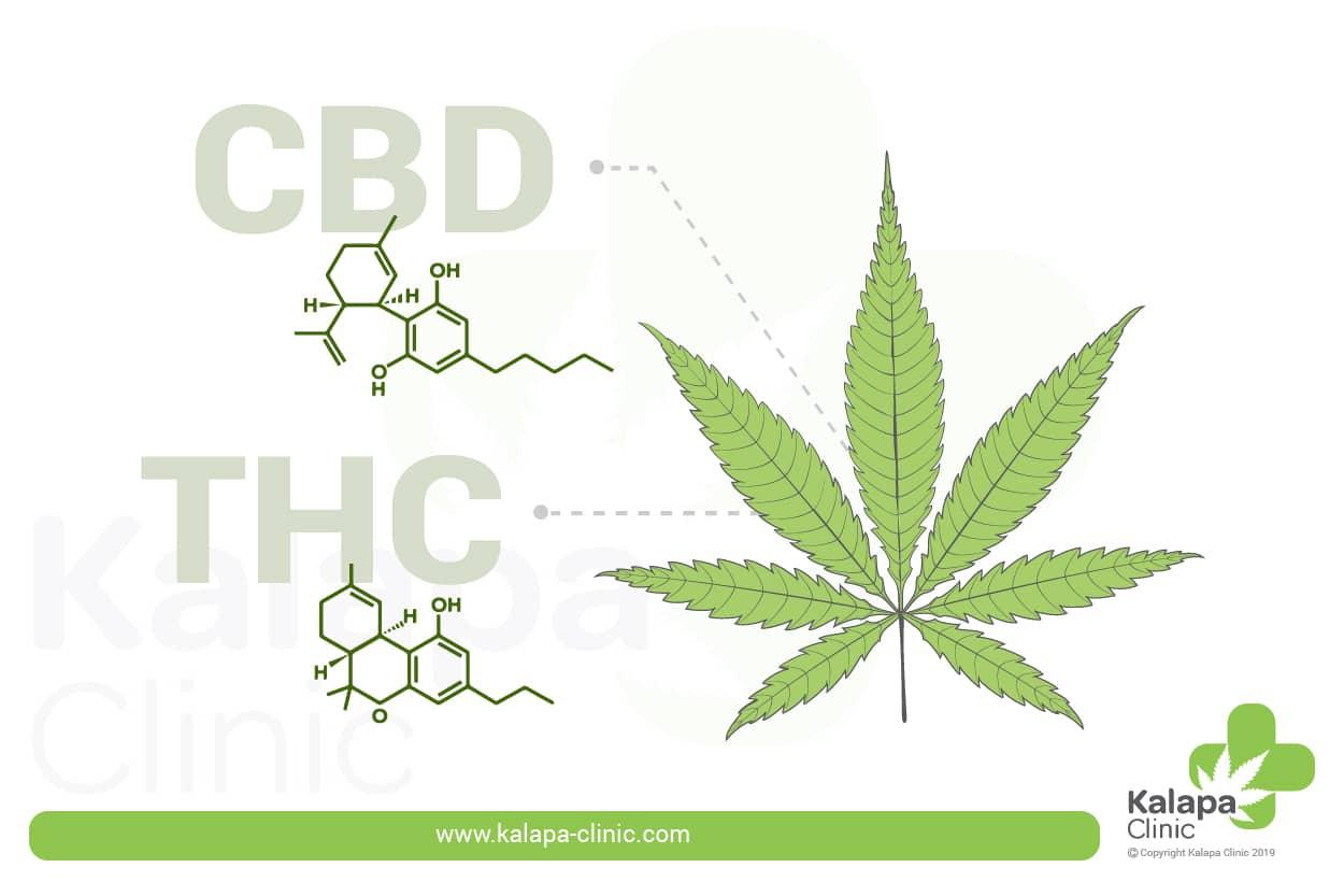 THC y CBD: ¿Cuál es la diferencia entre ambos cannabinoides? | Kalapa Clinic