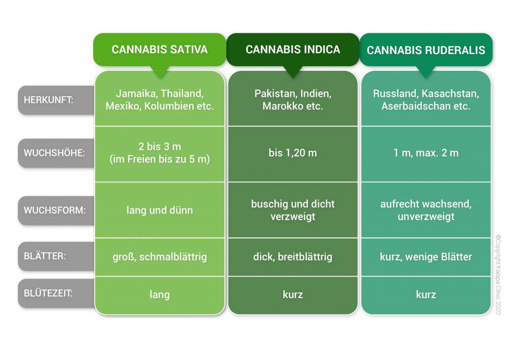 Unterschiede zwischen Cannabis Sativa, Indica und Ruderalis | Kalapa Clinic