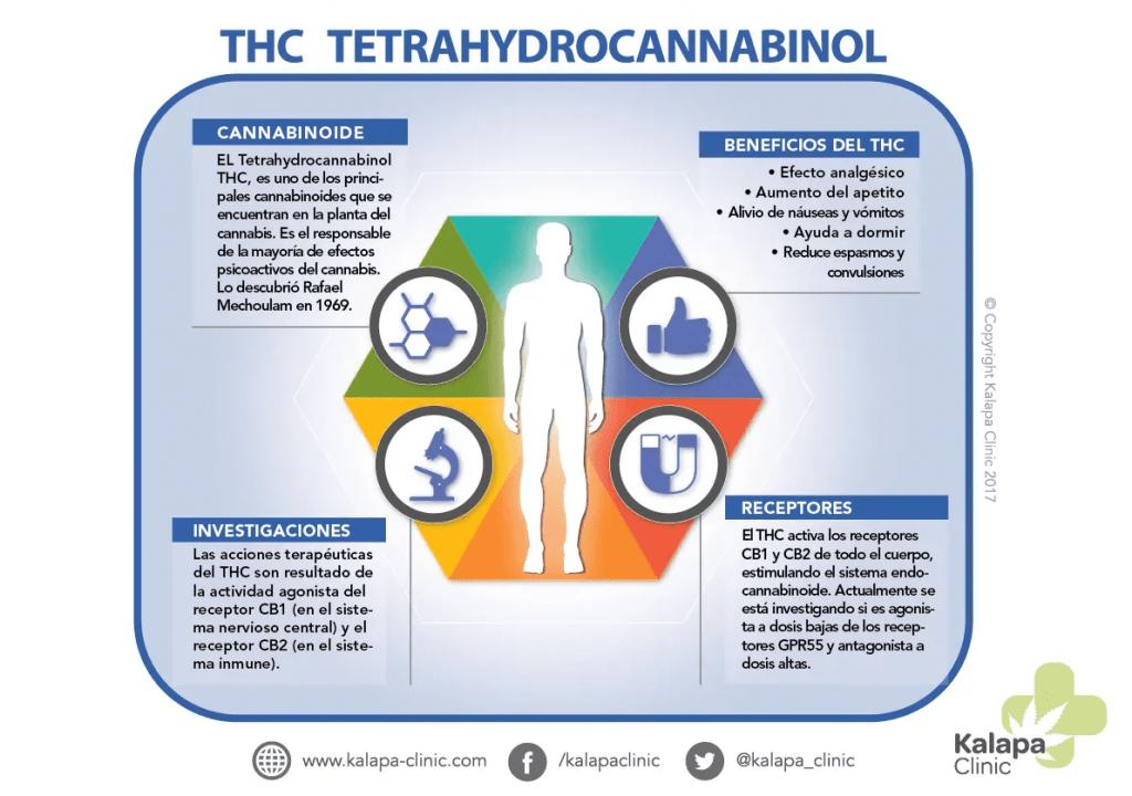 Infográficos do Tetra-hidrocanabinol  | Kalapa Clinic