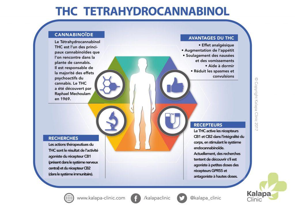 Infographie sur le THC | Tetrahidrocannabinol | Kalapa Clinic