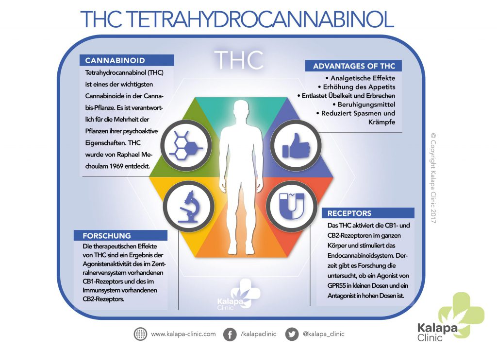 Tetrahydrocannabinol Infografik | Kalapa Clinic