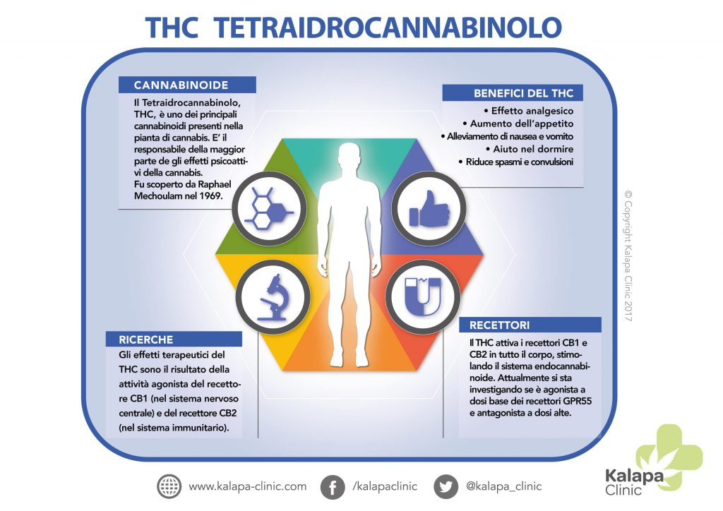 Infografica del tetraidrocannabinolo | Kalapa Clinic
