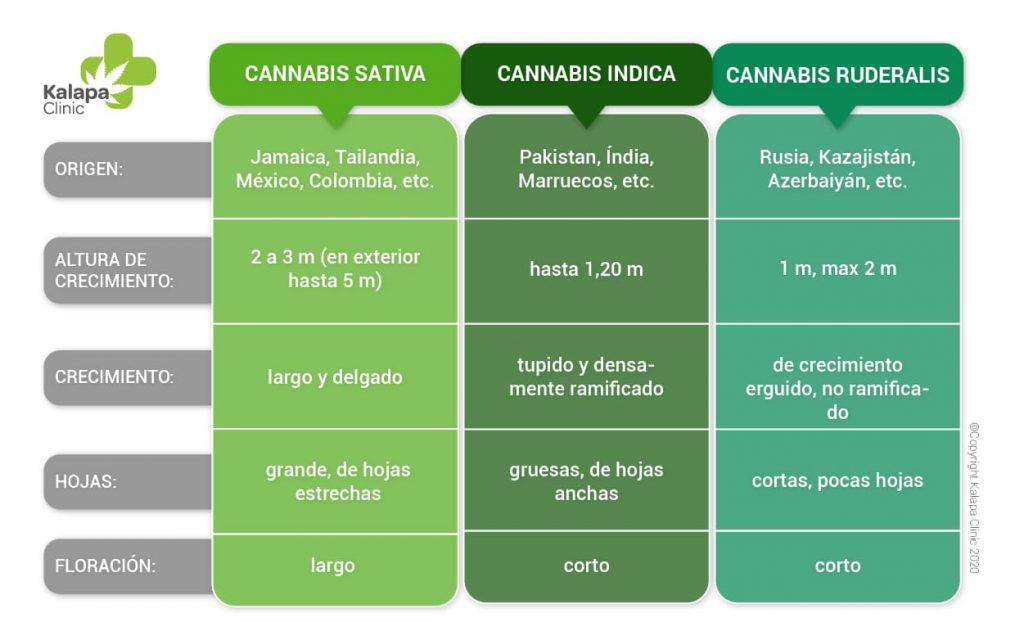 Diferencias entre el cannabis sativa, índica y ruderalis | Kalapa Clinic