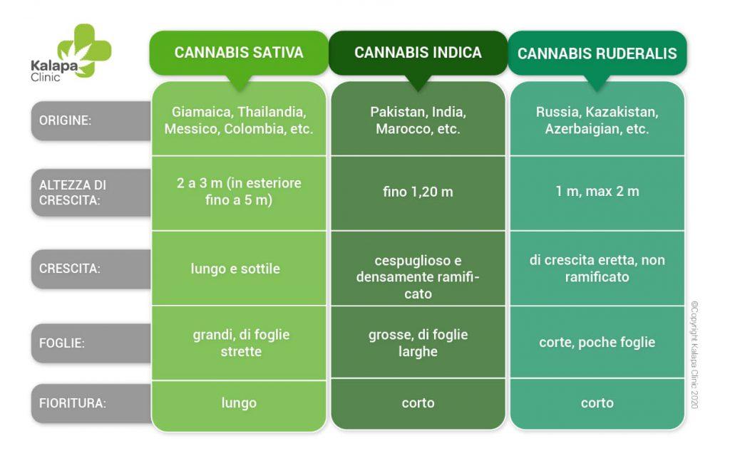 Differenze tra cannabis sativa, indica e ruderalis | Kalapa Clinic