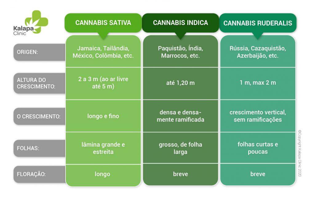 Diferenças entre cannabis sativa, indica e ruderalis | Kalapa Clinic
